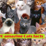 Cats facts