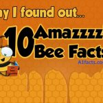 TOP FACTS ABOUT BEES