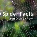 Amazing facts about Spider