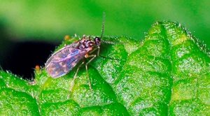 Facts about Insects