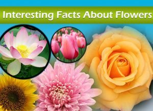 Facts About Flowers