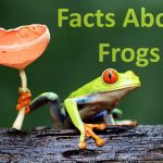 10 Facts About Frogs