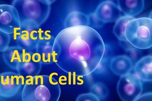Facts About Human Cells