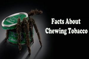 Facts About Chewing Tobacco