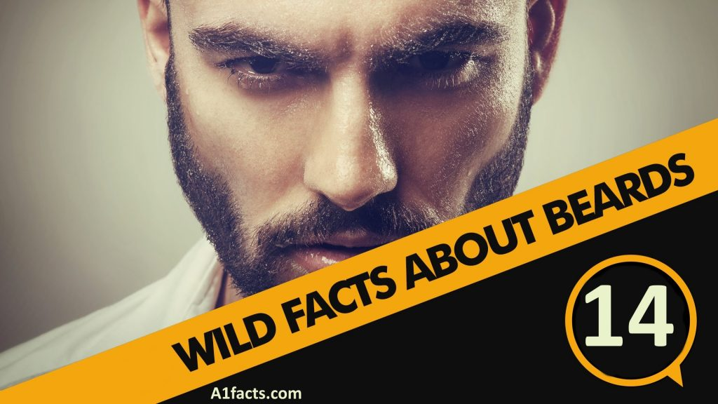 Amazing 14 Interesting Facts About Beards A1Facts Natural Hairstyles Runnerswayorg