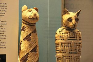 Facts About Mummies