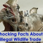 10 Shocking Facts About Illegal Wildlife Trade